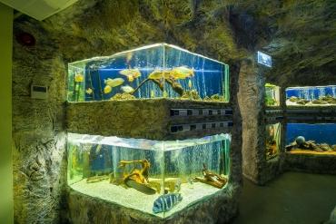 Започва изграждане на 10 и 12-тонни аквариуми в  Регионалния природонаучен музей – Пловдив